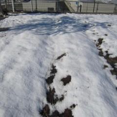 またしても5日に雪が降りまだ溶けずに残っています