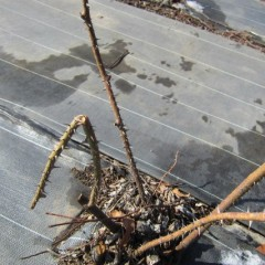 農場を見回ると雪で折れてしまった枝を見つけました
