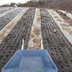 自然条件に左右されることの多い栽培は同じ条件は二度とありません