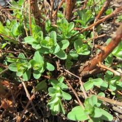 新緑が芽に眩しい季節です