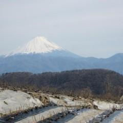 富士山も見守ってくれていますよ