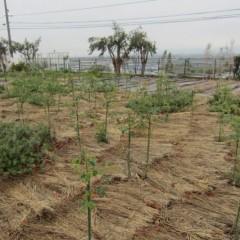 植物が育つには水が必要