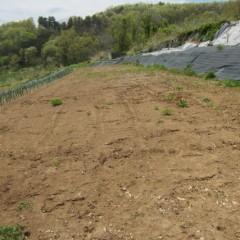 新しく種を蒔いた畑