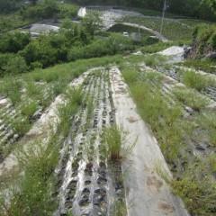 収穫後のカモマイル・ジャーマン畑