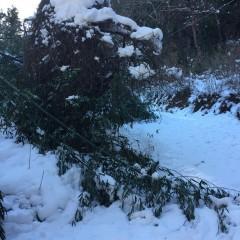 更に登ると積雪が増し倒れた竹などが道をふさいでこれ以上先へは行けませんでした