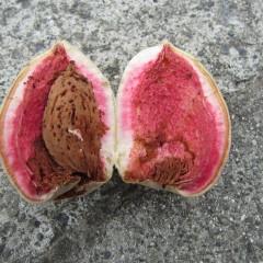 実を割ると中も鮮やかなピンク色、甘い桃の香りが漂います