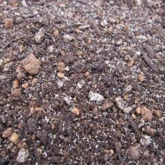種が小さいので培養土に混ぜてから蒔きます
