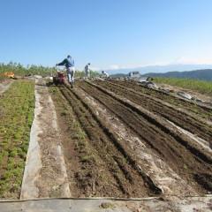 硬くなった土を耕耘します