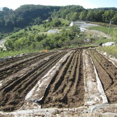 耕し終わった畑
