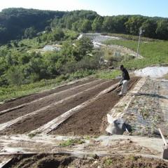 耕した畑を整地します