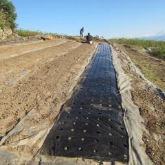 マルチには草除けと地温を上げる働きがあります
