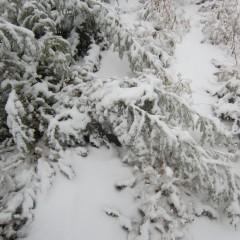 湿った雪は重たくのし掛かります