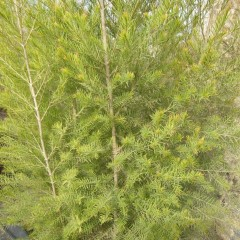 寒さに耐えて越冬出来た枝