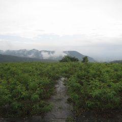 朝から雨が降ったり止んだりの蒸し暑い農場です