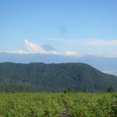夕方、富士山が雲の間から顔を出してくれました