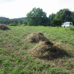 先ずは除草してそのままになっていた雑草を集めます