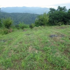 草を片付けたものの次に生えてきた草でいっぱいのカモマイル・ジャーマン畑