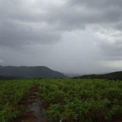 夕方、風雲急を告げスコールの様な雨に襲われました