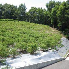 34℃の炎天下の中で除草作業が続けられています