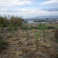昨夜の冷たい雨が上がった事務局前のローズ畑