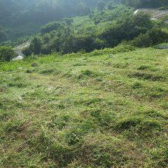 何とか夕方までに草刈り作業終了