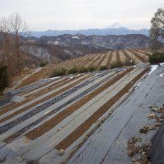 農場の雪はようやく全て無くなりました
