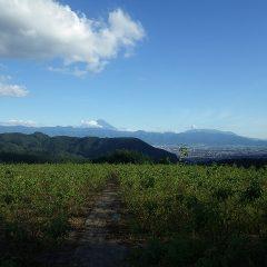ご褒美でしょうか、夕方に富士山が雲の間から顔を出しました