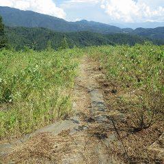 除草したローズ畑とこれから除草する畑の境目