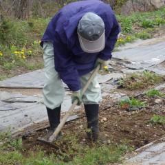 こちらはエキナセアの除草作業中