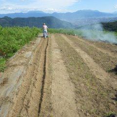 固くなった畑の土に空気を混ぜ込む作業です