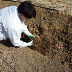 固まった土を砕いて細かくします