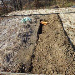地道な作業が続きます