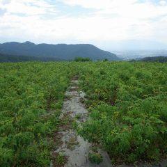 昨日の雨も上がり、農場は朝から蒸し暑い一日の始まりです