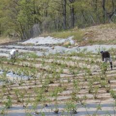 ローズ畑では今日も除草作業