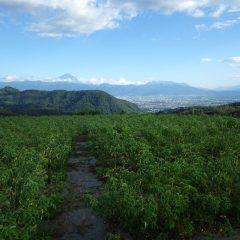 夕方、雲が切れて富士山が顔を見せてくれました