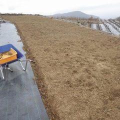 大粒の雨が落ちて来たので除草作業中断