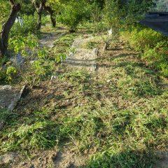 炎天下の中、除草作業は続いています