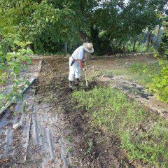 日が傾くまで一日中除草作業は続けられています
