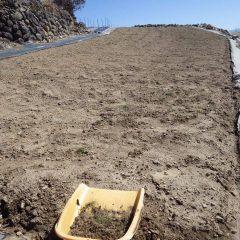 この畑の1回目の除草作業終了