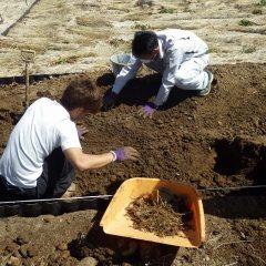 畑を50cm程掘り起こして雑草の地下茎を取り除きます