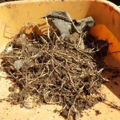 地下茎が切れて残っているとそこからまた雑草が生えてきます