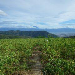 夕方になって雲の切れ間から富士山の山頂が顔を出してくれました
