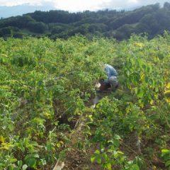日が暮れるまで除草作業は続けられました