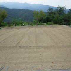 雑草だらけになってしまったカモマイル・ジャーマン畑を再度耕耘しました