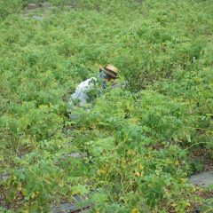 今日は風もなく雨が降りそうな湿度の高い中での除草作業です