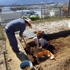 ユーカリ・レモン畑の除草作業