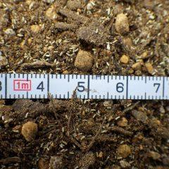 長さ1mm程の吹けば飛ぶ様な小さな種です