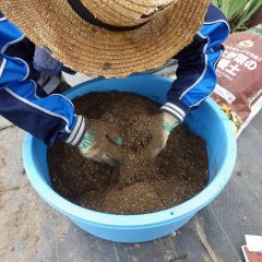 培養土とよく混ぜます