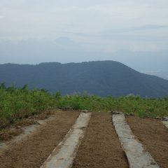 3つの畑に蒔き終わると雲の切れ間から富士山が現れました