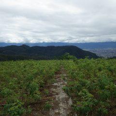 日本晴れとはならず雲に覆われた農場です